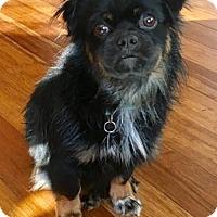 Adopt A Pet :: Petey - Atlanta, GA