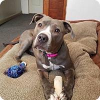 Adopt A Pet :: Charlotte - Dayton, OH