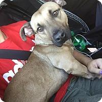 Adopt A Pet :: Bronco - Saint Augustine, FL