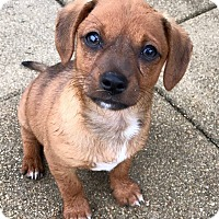 Adopt A Pet :: Larry - Waco, TX