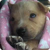 Adopt A Pet :: Cash 3 - Houston, TX