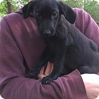 Adopt A Pet :: LD3 - Hanover, PA