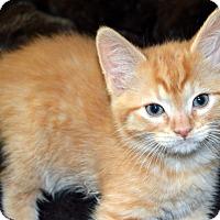 Adopt A Pet :: Buster - Richmond, VA