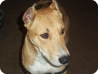 Collie Mix Dog for adoption in Conway, Arkansas - Spock Loves Kids!