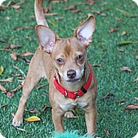 Adopt A Pet :: Bunny - Lake Forest, CA