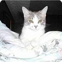 Adopt A Pet :: Kealey - Toronto, ON