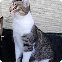 Adopt A Pet :: Tess - Palmdale, CA