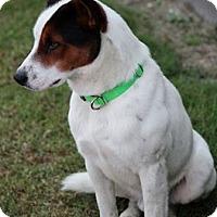Adopt A Pet :: Rudy - Vidor, TX