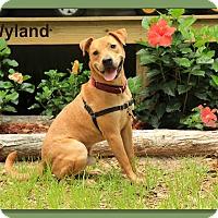 Adopt A Pet :: Wyland - Sarasota, FL