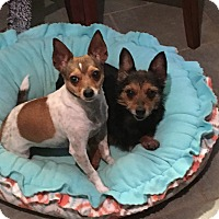 Adopt A Pet :: Bree and Brady - Marietta, GA