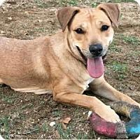 Adopt A Pet :: Felicia - 45 lbs! - Los Angeles, CA