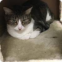 Adopt A Pet :: Luna - Titusville, FL