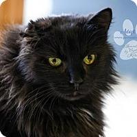 Adopt A Pet :: YOYO - Toledo, OH