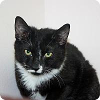Adopt A Pet :: Igor (Manhattan) - New York, NY