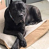 Adopt A Pet :: Franklyn - Oakhurst, NJ