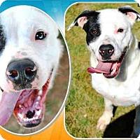 Adopt A Pet :: A077558 - Grovetown, GA