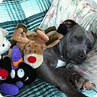 Adopt A Pet :: Dezzi - Hermosa, CA