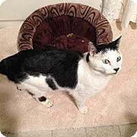 Adopt A Pet :: Sheldon - Simpsonville, SC