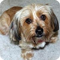 Adopt A Pet :: Faith - Hardy, VA