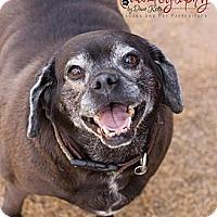 Adopt A Pet :: Marley - Chandler, AZ
