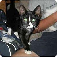 Adopt A Pet :: Dinah - Davis, CA