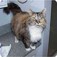 Adopt A Pet :: Betsy (Great Cat!) - Portland, OR