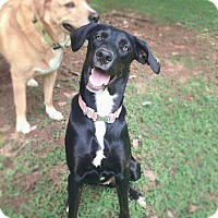 Adopt A Pet :: Cheeto - Chattanooga, TN