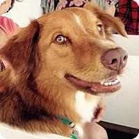 Adopt A Pet :: Acadia - New Canaan, CT
