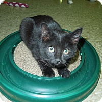 Adopt A Pet :: Spaetzle - Medina, OH