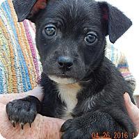 Adopt A Pet :: Gage (3 lb) - SUSSEX, NJ