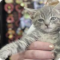 Adopt A Pet :: JP - Reston, VA