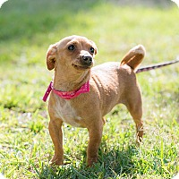 Adopt A Pet :: Pucca - San Diego, CA
