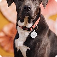Adopt A Pet :: Watson - Portland, OR