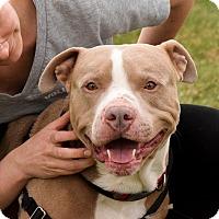 Adopt A Pet :: Wilbur - Meridian, ID
