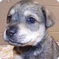 Adopt A Pet :: Mo - Oxford, MS