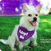 Adopt A Pet :: Elliott - Los Angeles, CA