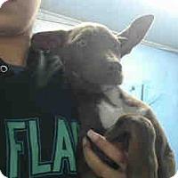 Adopt A Pet :: URGENT ON 3/28  San Bernardino - San Bernardino, CA