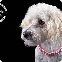 Adopt A Pet :: Hailey - Lodi, CA