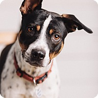 Adopt A Pet :: Lucky Boy - Portland, OR