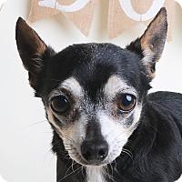 Adopt A Pet :: Chipper - Wilmington, DE