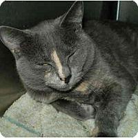 Adopt A Pet :: Katya - San Ramon, CA