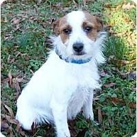 Adopt A Pet :: Frasier - Mocksville, NC