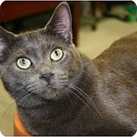 Adopt A Pet :: Rainer - Naples, FL