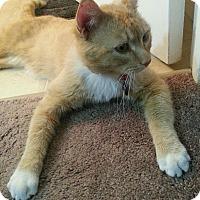 Adopt A Pet :: Bryson - Edmonton, AB