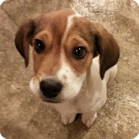 Adopt A Pet :: Shiloh*ADOPTED!* - Chicago, IL