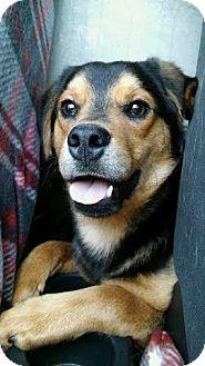Shepherd (Unknown Type) Mix Dog for adoption in Providence, Rhode Island - Waylon