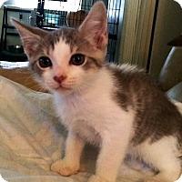 Adopt A Pet :: Kiwi - Cocoa, FL