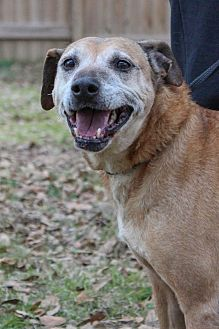 Hound (Unknown Type) Mix Dog for adoption in Jackson, Mississippi - Destin