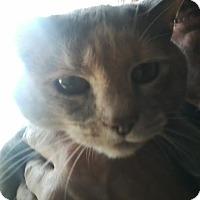 Adopt A Pet :: Precious - Columbus, OH