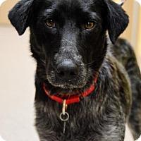 Adopt A Pet :: Fairhope - Kennesaw, GA